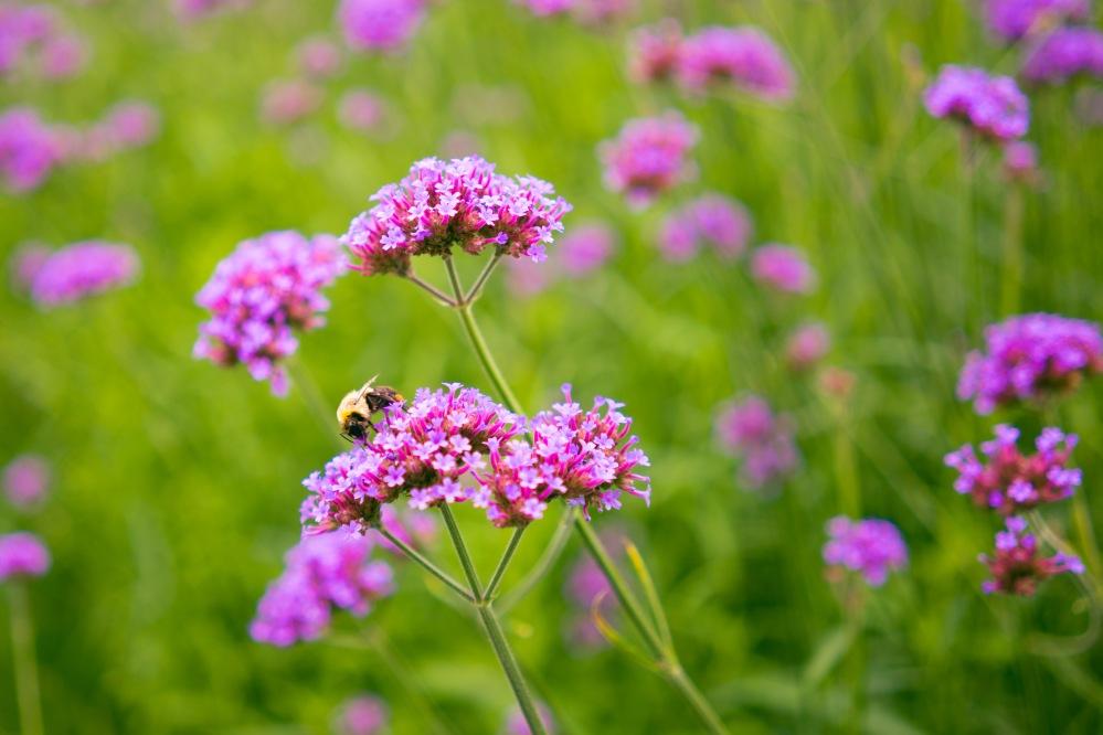 201608_EMM_Mohonk_landscape_garden-7231